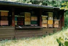 Bienenstand am Waidling