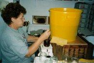 Abfüllen des Honigs in Gläser
