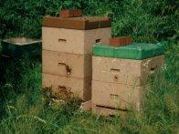 Magazinbeute als Bienenstand im Sommertracht